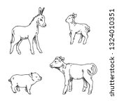 Set Of Young Farm Animals. Lam...