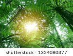 tree canopy in tropical jungle    Shutterstock . vector #1324080377