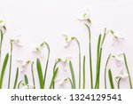 fresh snowdrops on pink...   Shutterstock . vector #1324129541