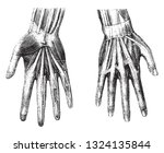 anatomy of the hand of man ... | Shutterstock .eps vector #1324135844