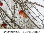 pripyat  the exclusion zone of...   Shutterstock . vector #1324189814