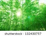 bamboo forest  | Shutterstock . vector #132430757