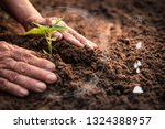 old hands planting a green... | Shutterstock . vector #1324388957
