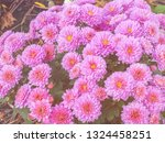 image of beautiful flowers on... | Shutterstock . vector #1324458251