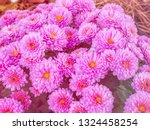 image of beautiful flowers on... | Shutterstock . vector #1324458254