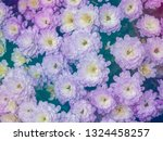 image of beautiful flowers on... | Shutterstock . vector #1324458257