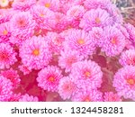 image of beautiful flowers on... | Shutterstock . vector #1324458281