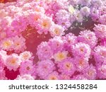 image of beautiful flowers on... | Shutterstock . vector #1324458284