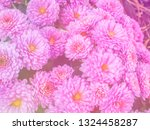 image of beautiful flowers on... | Shutterstock . vector #1324458287