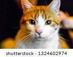 portrait of yellow white... | Shutterstock . vector #1324602974