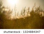 field of grass during sunset | Shutterstock . vector #1324884347