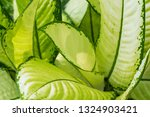 white leaf background. tropical ... | Shutterstock . vector #1324903421