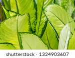 white leaf background. tropical ... | Shutterstock . vector #1324903607