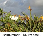 Small photo of Blooming Through The Bluster