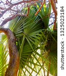 palm leaves...   Shutterstock . vector #1325023184