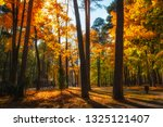 autumn forest park with... | Shutterstock . vector #1325121407