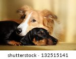 Cute Dog Border Collie And...