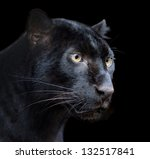 Beautiful Black Panther On Dar...