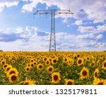 Sunflowers Field Power Pole Energy - Fine Art prints