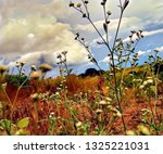 sometimes the beauty is in the...   Shutterstock . vector #1325221031