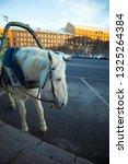 funny cute white horse... | Shutterstock . vector #1325264384