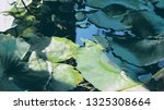 Calming Lotus Leaves Floating...