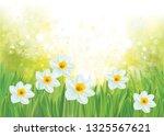 vector daffodil flowers on...   Shutterstock .eps vector #1325567621