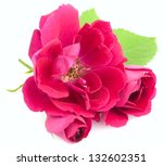 Beautiful  Red Rose Flowers with leaves isolated on white background - stock photo