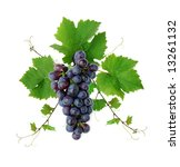 Ornamental motif of blue wine grape, isolated - stock photo