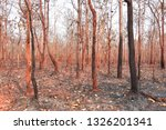 forest fires  burning deciduous ... | Shutterstock . vector #1326201341