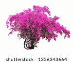 Purple Flower Tree Isolated...