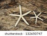 Two White Starfish On Driftwood