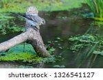white wagtail or motacilla alba.... | Shutterstock . vector #1326541127