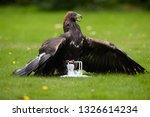 bird at work. golden eagle ... | Shutterstock . vector #1326614234