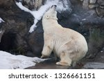 polar bear deftly bent up ... | Shutterstock . vector #1326661151