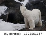 polar bear deftly bent up ... | Shutterstock . vector #1326661157