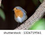 garden wildlife. european robin ... | Shutterstock . vector #1326719561