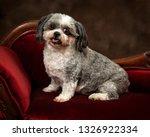 horizontal shot of a shih tzu... | Shutterstock . vector #1326922334