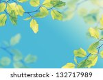 Young succulent leaves on the tree, vintage - stock photo