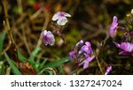 millimeter sized flowers at the ... | Shutterstock . vector #1327247024