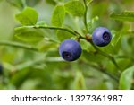 two delicious huckleberry... | Shutterstock . vector #1327361987