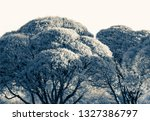 stylish trees in the city lawn | Shutterstock . vector #1327386797