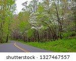 Dogwood Trees Bloom Along A...