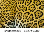 Close Up Shot Of A Jaguar's Fu...