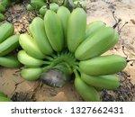 fresh green hand of banana from ... | Shutterstock . vector #1327662431