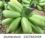 fresh green hand of banana from ... | Shutterstock . vector #1327662434