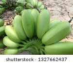 fresh green hand of banana from ... | Shutterstock . vector #1327662437