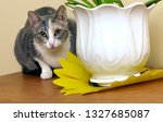 the cat  lurking  watchfully... | Shutterstock . vector #1327685087