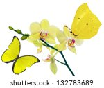 Light Yellow Orchid Flowers An...