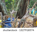 Small photo of Phang Nga, Thailand - JAN , 17 2019 : Monkey opens the trash lid to delve into the food at garbage dump zone Mu Koh Surin National Park.
